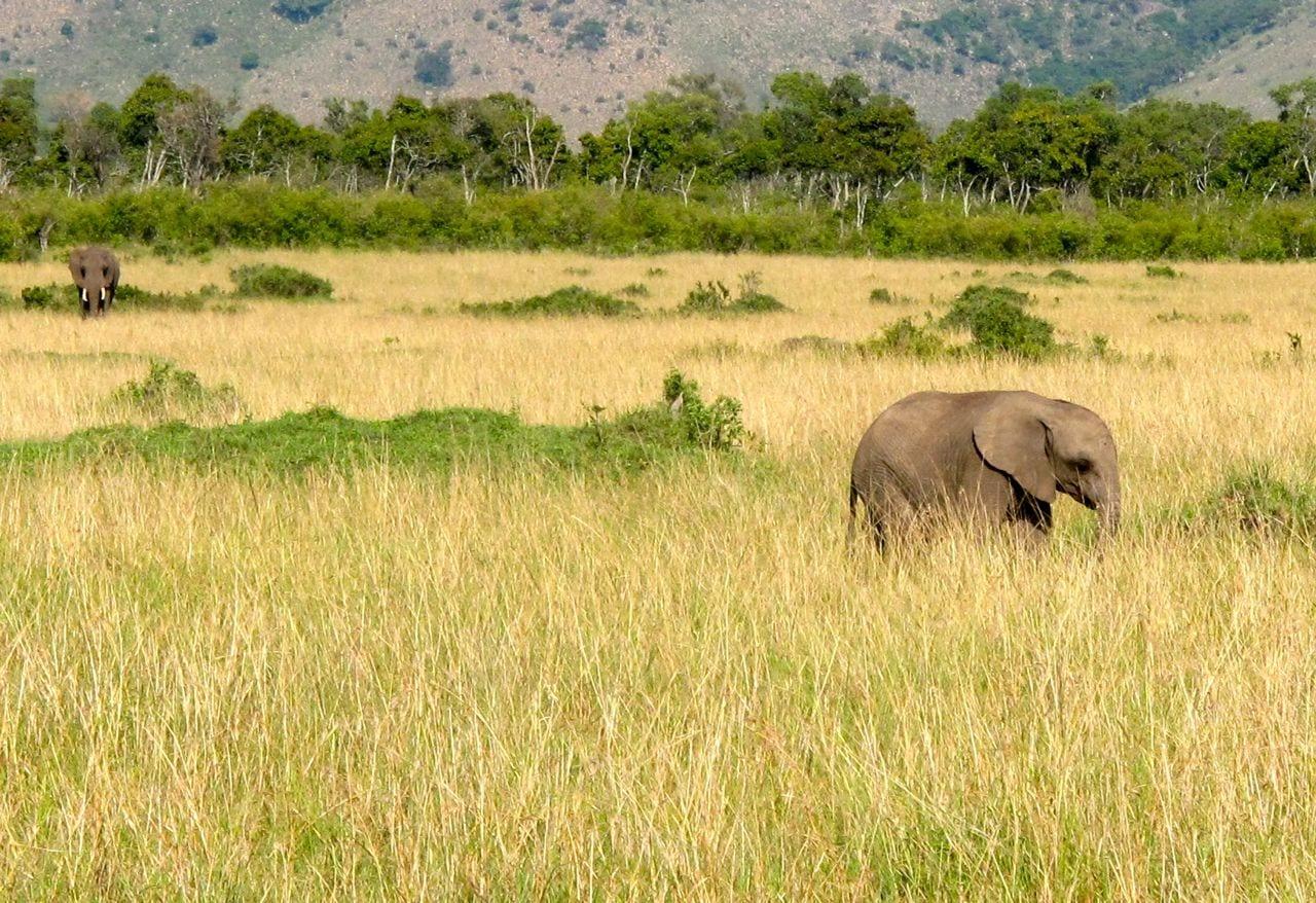 Baby Elephant Kenya Masai Mara Africa