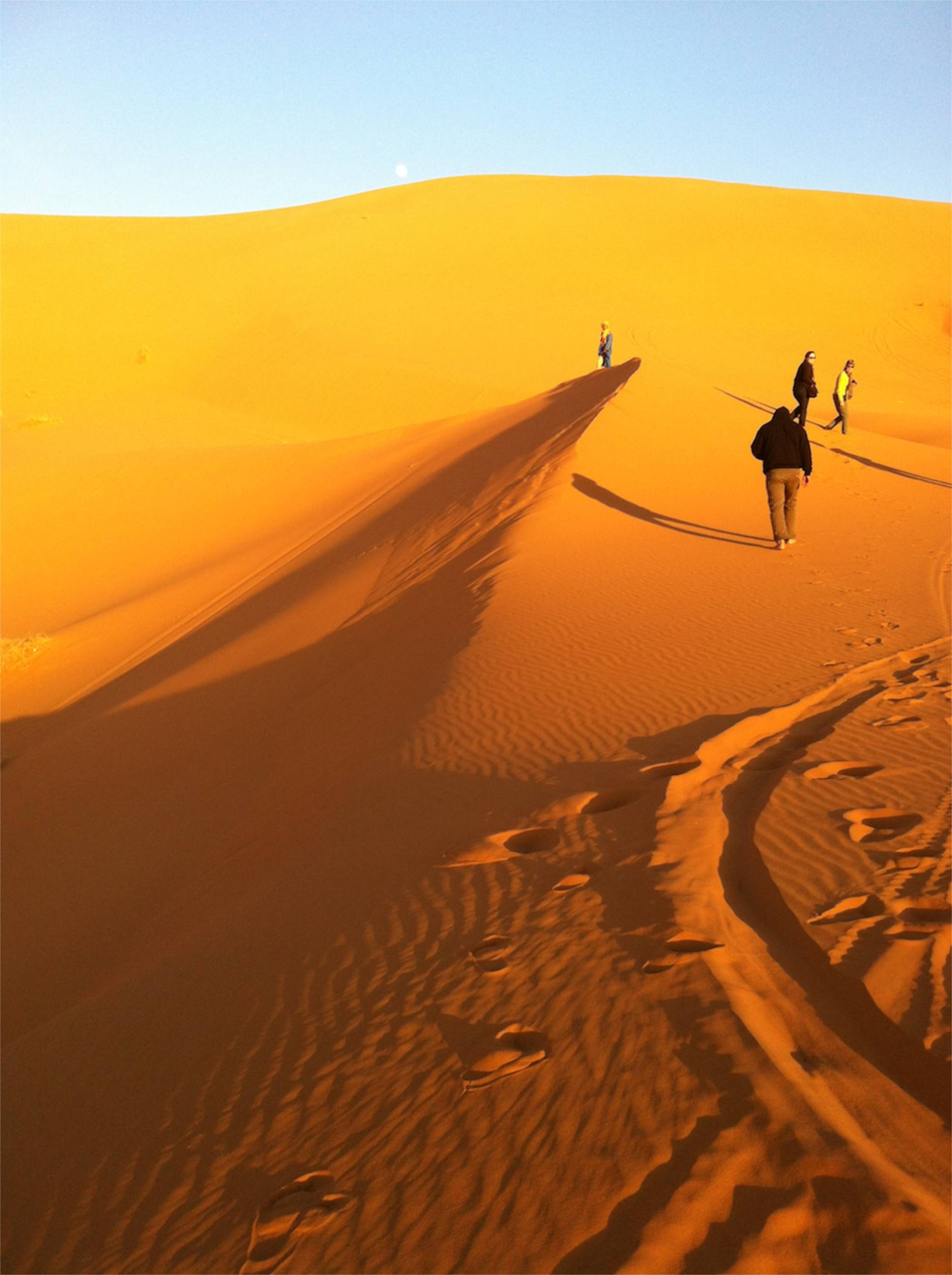 survive desert essay Some animals that live in the hot desert are cold-blooded, like snakes, insects, and lizards mammals that live in the desert are usually small, such as the.