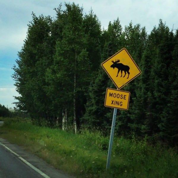 Moose Crossing Alaska
