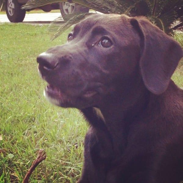 Vader puppy!