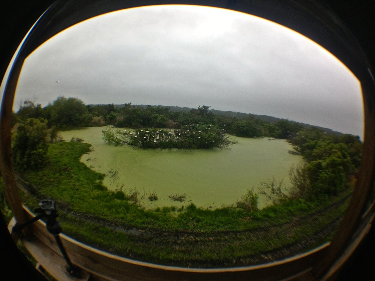 Fisheye shot taken with my Olloclip lens on iPhone 5