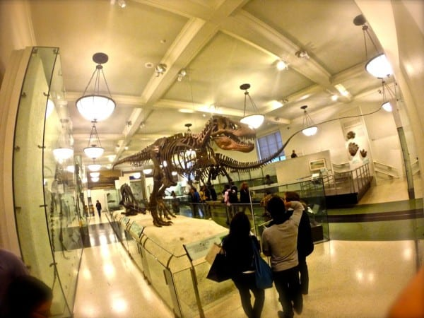 At the Museum of Natural History - full of people on a rainy October day