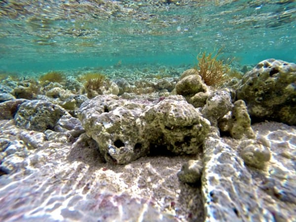 A glimpse at the underwater scenery at Palomino Island