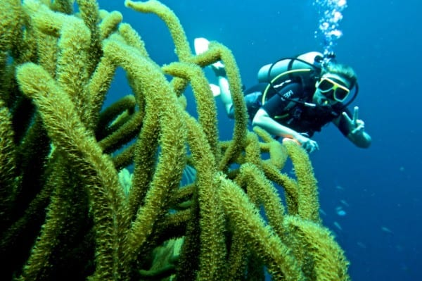 Diving on Bonaire is a given... but is there anything else to do? Photo by Alex in Wanderland