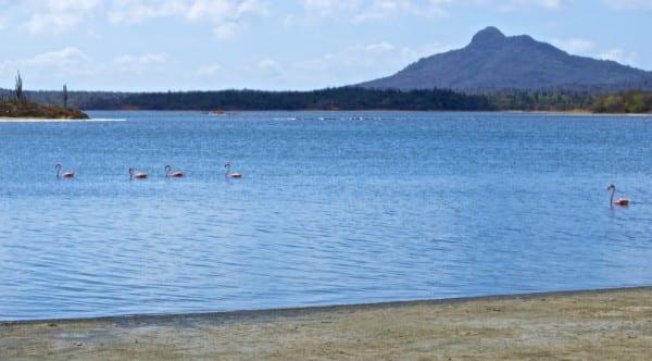 Flamingos on the Gotomeer lagoon