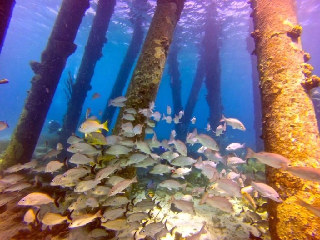 Salt Pier GoPro Bonaire Underwater Dive Footage