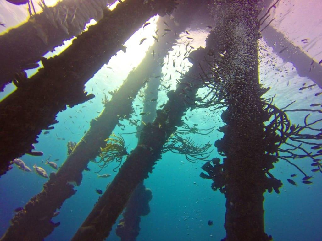 Salt Pier Bonaire Scuba Dive Site