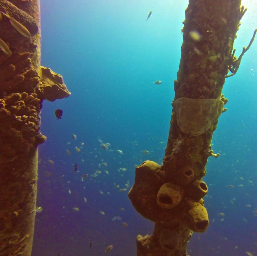 Salt Pier Bonaire Dive Diving Scuba