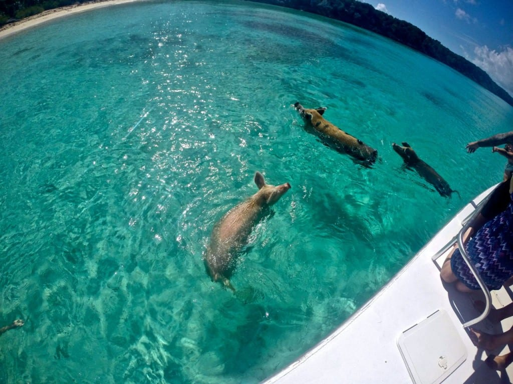 Swimming Pigs of Exuma: 6 Tips for the Perfect Visit - Angie