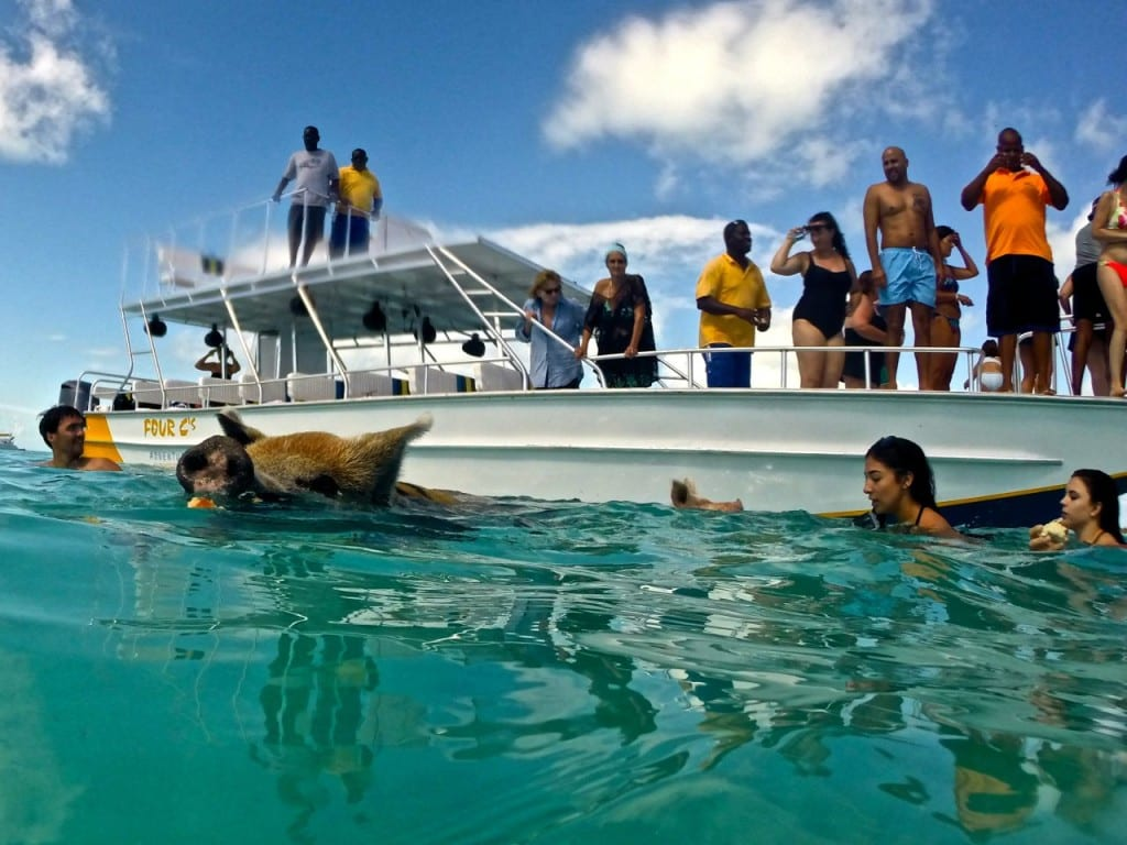 Swimming Pigs of Exuma: 6 Tips for the Perfect Visit - Angie Away