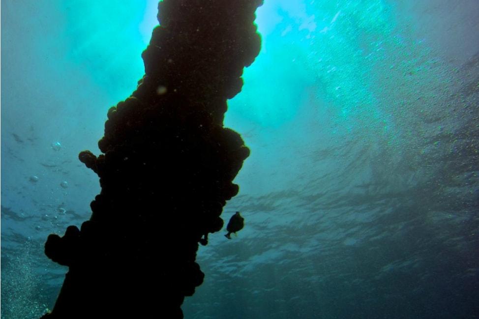 Scuba Dive Salt Pier