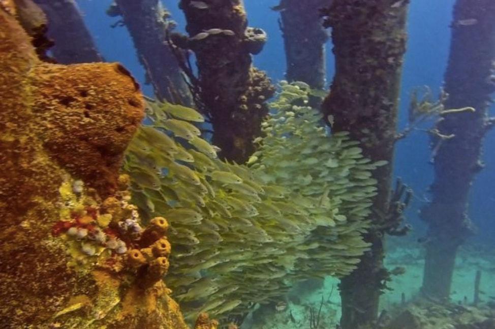 Scuba Dive Bonaire