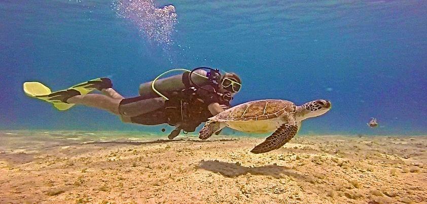 Angie Away Scuba Sea Turtle Bonaire Dive