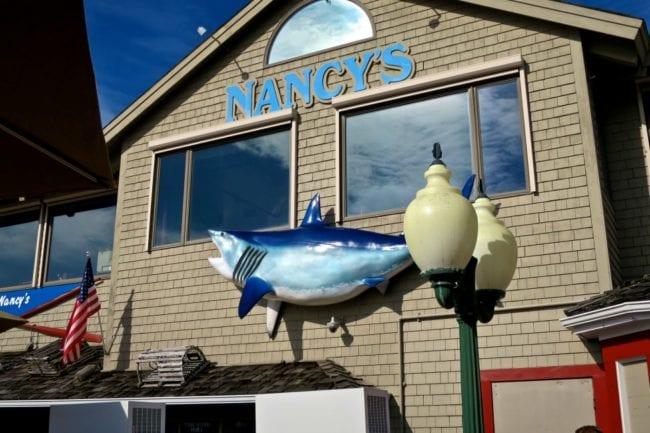 marthas vineyard shark