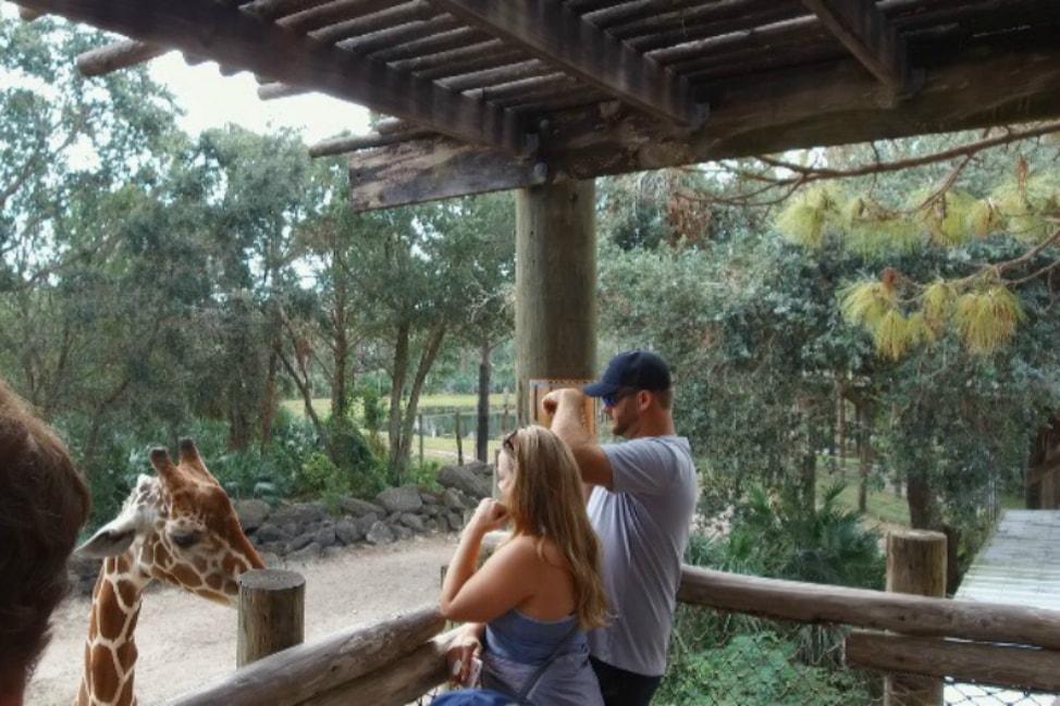 feeding-giraffes-space-coast